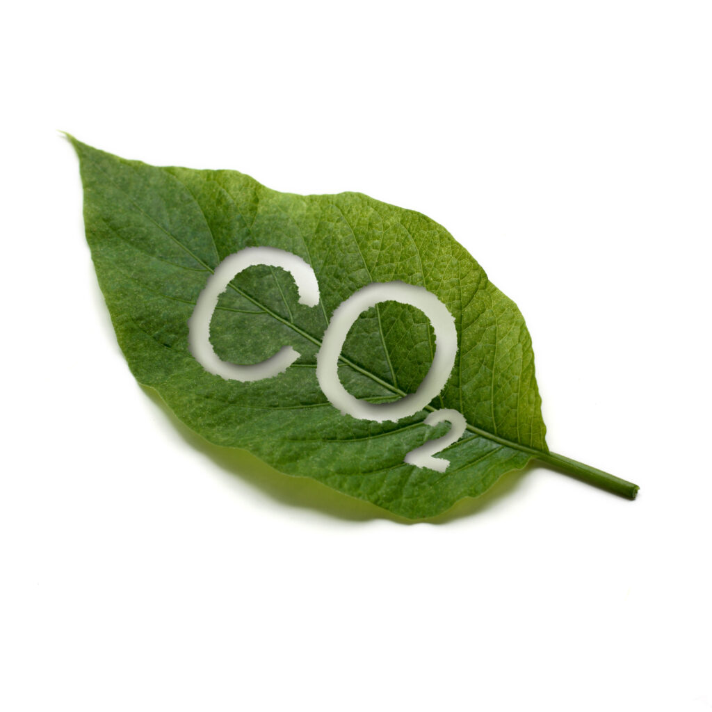 green leaf on white background, with CO2 for Carbon Dioxide cut out, illustrating the function of plants to process CO2